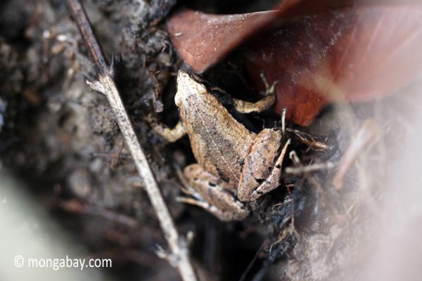 Frog [java_0349]