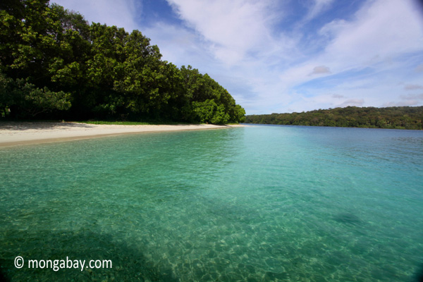 Borneo rainforest canopy.