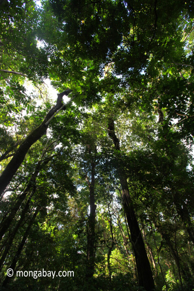 Peucang Island rainforest [java_0490]