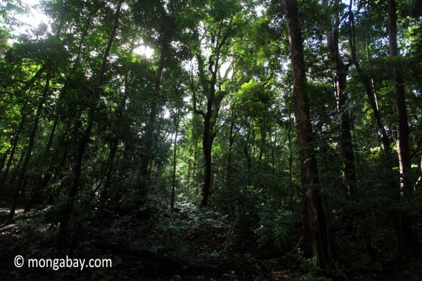 Peucang Island rainforest [java_0492]