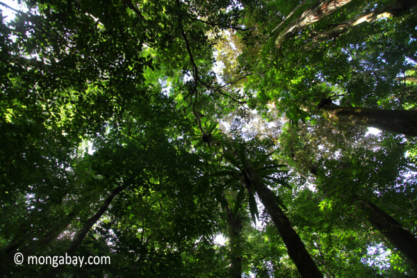 The ceiling of the rain forest, as seen from below
