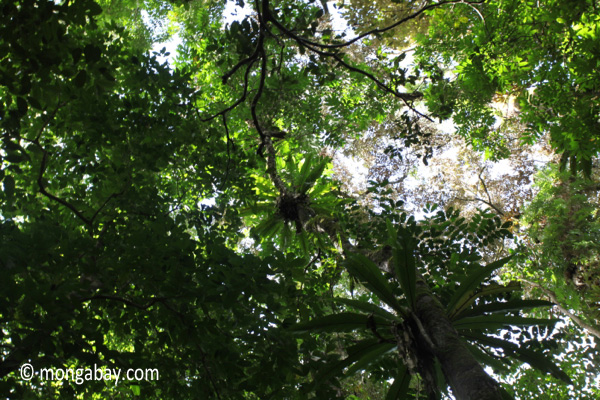 The ceiling of the rainforest, as seen from below