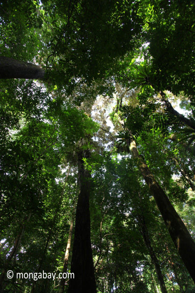 Peucang Island rain forest [java_0507]
