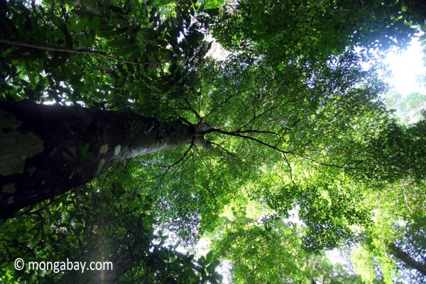 Peucang Island forest [java_0511]
