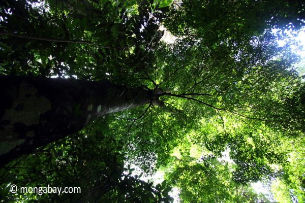 Peucang Island rainforest [java_0512]
