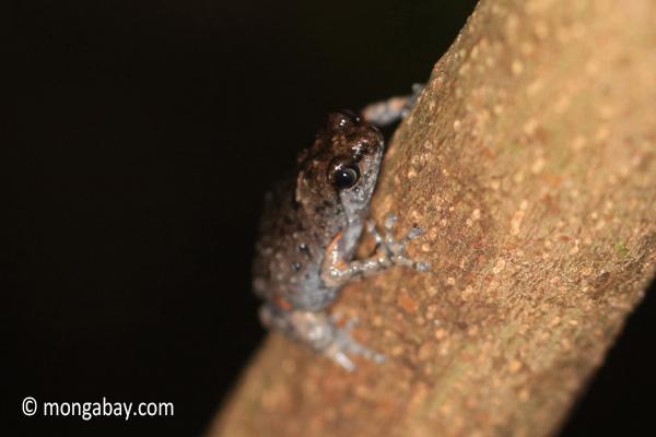 Frog [java_0639]