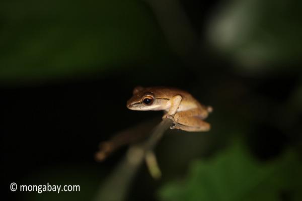 Frog [java_0650]