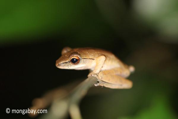 Frog [java_0651]