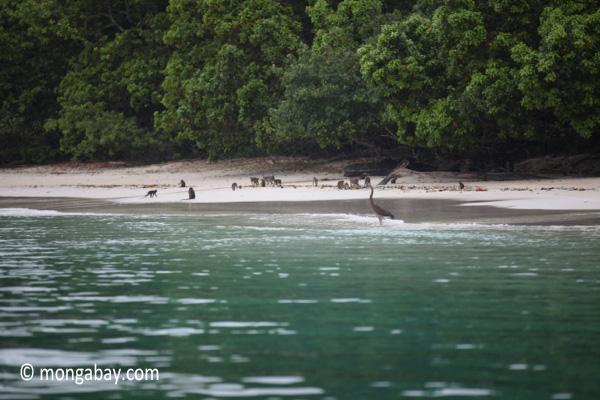 Monkeys on a beach