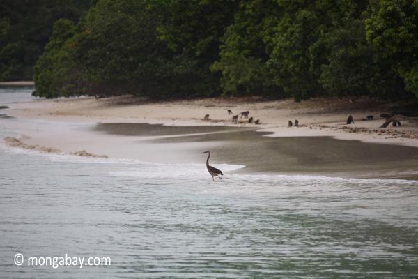 Heron on a tropical beach