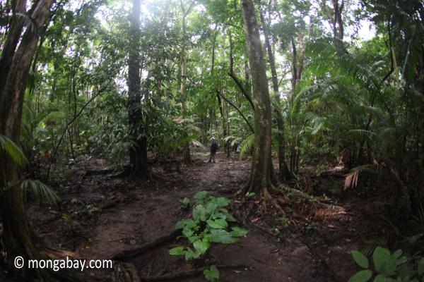 Javan rainforest