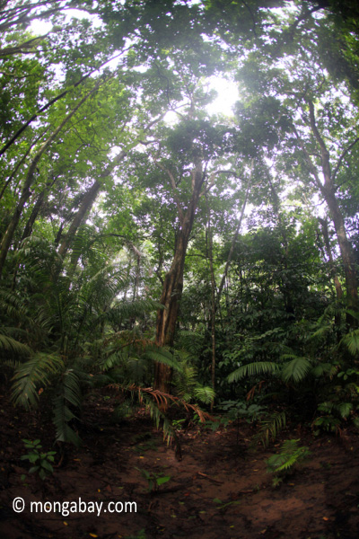 Javan tropical forest
