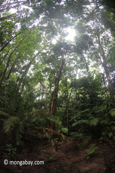 Javan forest [java_0721]