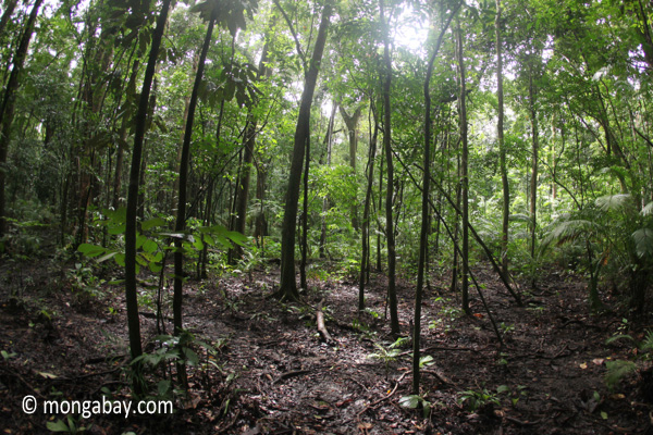 Jungle in Java [java_0731]
