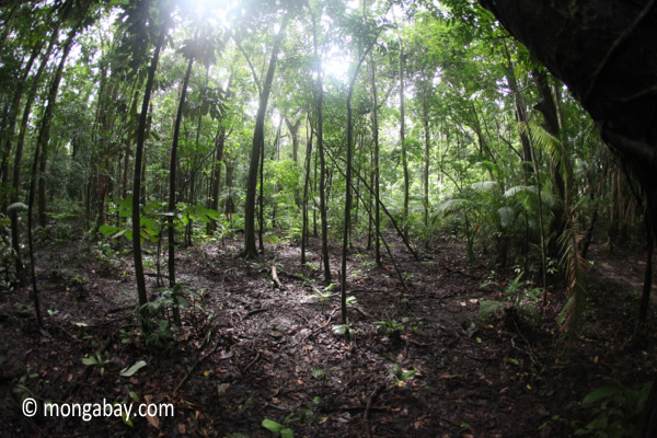 Forest in Java