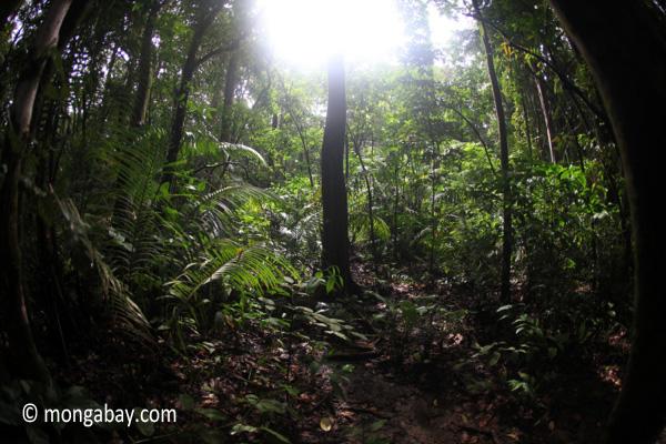 Javan rain forest