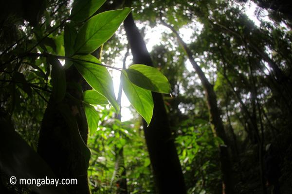 Selva tropical de Indonesia.