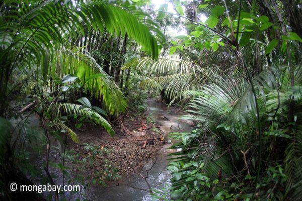 Rainforest stream in Java's Ujung Kulon National Park