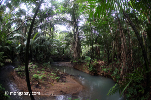 Rainforest creek in Java's Ujung Kulon National Park
