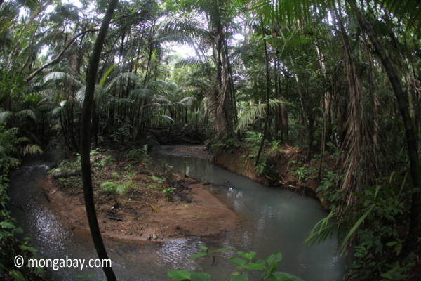 Lowland rainforest creek in Java's Ujung Kulon National Park
