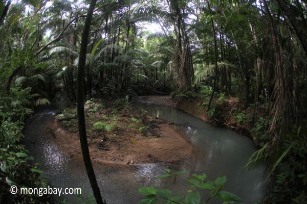 Rain forest stream in Java's Ujung Kulon National Park