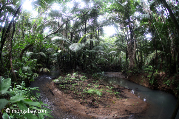 Lowland rain forest stream in Java's Ujung Kulon National Park