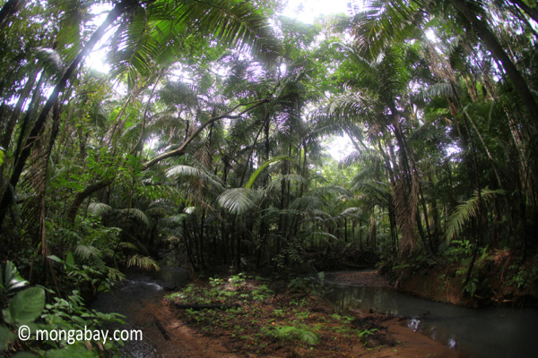 Rain forest creek in Java's Ujung Kulon National Park