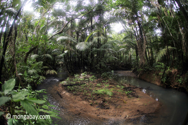 Jungle stream in Java's Ujung Kulon National Park