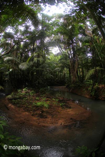 Jungle creek in Java's Ujung Kulon National Park