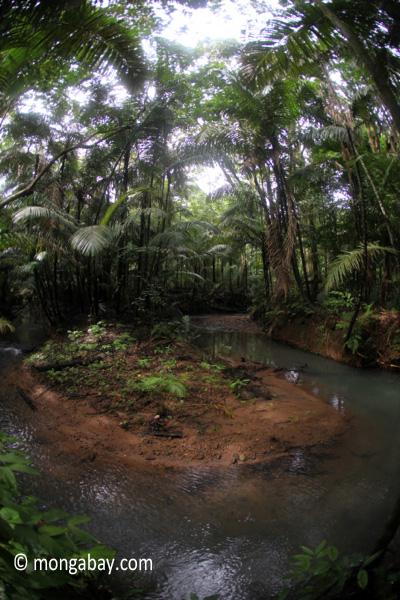 Lowland jungle creek in Java's Ujung Kulon National Park [java_0755]