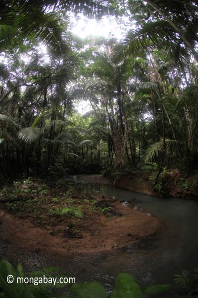 Jungle creek in Java's Ujung Kulon National Park [java_0756]