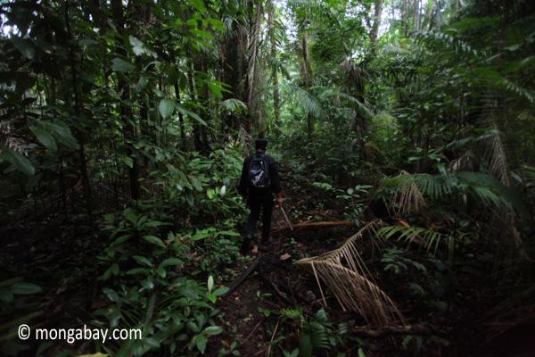 Rhino Protection Unit on patrol in Ujung Kulon's lowland rainforest