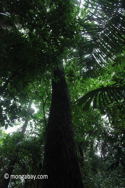 Ulung Kulon lowland rainforest