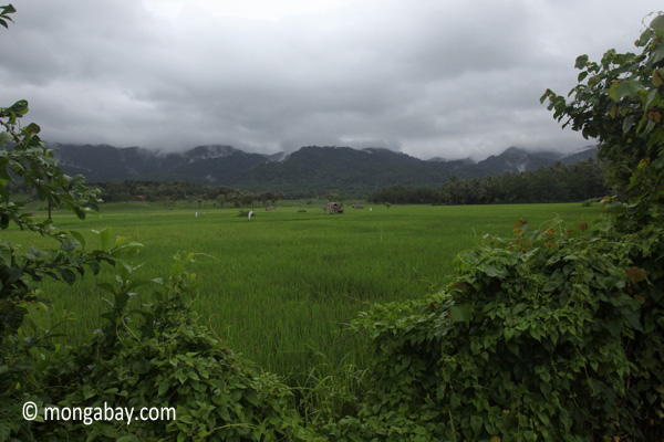 Rice fields and the forested mountains of Ujung Kulon National Park
