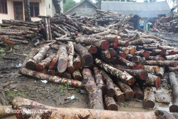 Sawmill for teak in Java