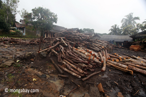 Teak log dump outside a sawmill