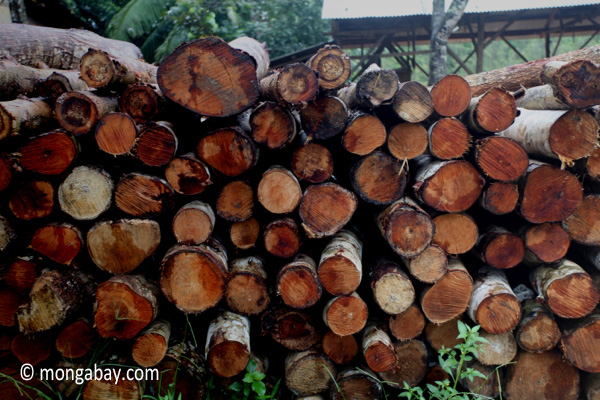 Pile of teak logs at a sawmill