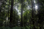 Forest in Bogor near CIFOR [java_0011]