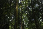 Forest in Bogor near CIFOR [java_0016]