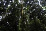 Forest in Bogor near CIFOR
