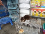 Pet otter for sale in the animal market in Jakarta [java_0020]