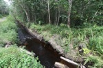 Peatland drainage canal along side a rubber plantation