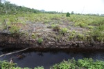 Peatland drainage canal along side a deforested area