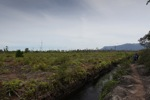 Peatland drainage canal along side a deforested area [kalbar_0007]