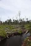 Destroyed peat forest in Indonesian Borneo [kalbar_0056]