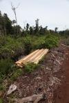 Illegal logging in the rainforest of Indonesian Borneo [kalbar_0060]