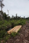 Illegal logging in the rainforest of Indonesian Borneo [kalbar_0062]