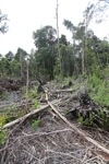 Deforested peat forest in West Kalimantan, Indonesia [kalbar_0065]