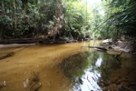 Sand-bottom creek that formers the border of Gunung Palung