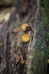 Orange mushroom [kalbar_0076]